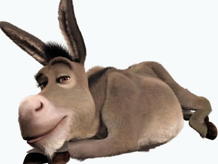 burro-249-1_435x326