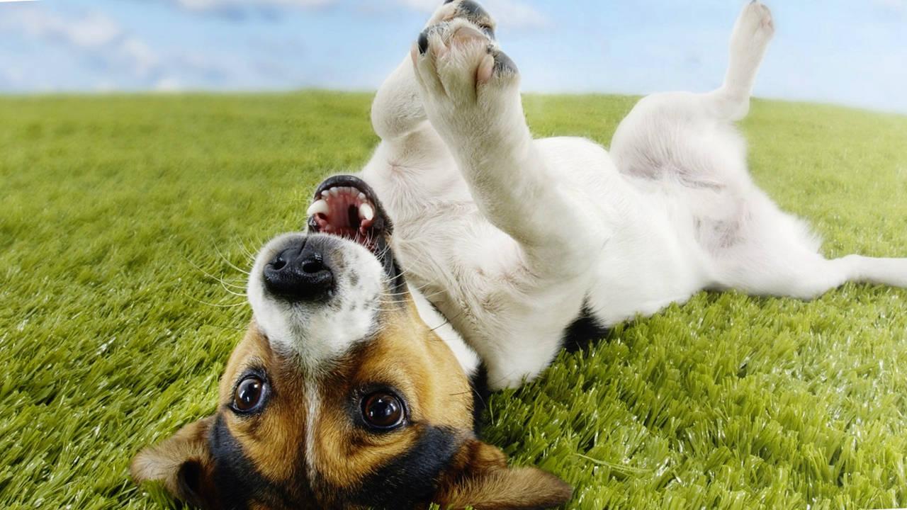 El perro y la salud