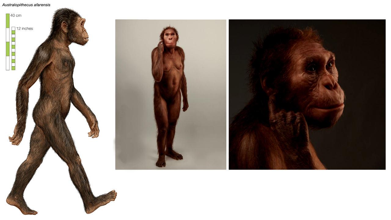 Hallan el cráneo más antiguo de un Australopithecus