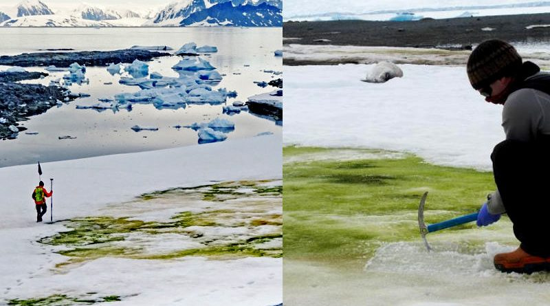 Veremos en el futuro más nieve verde
